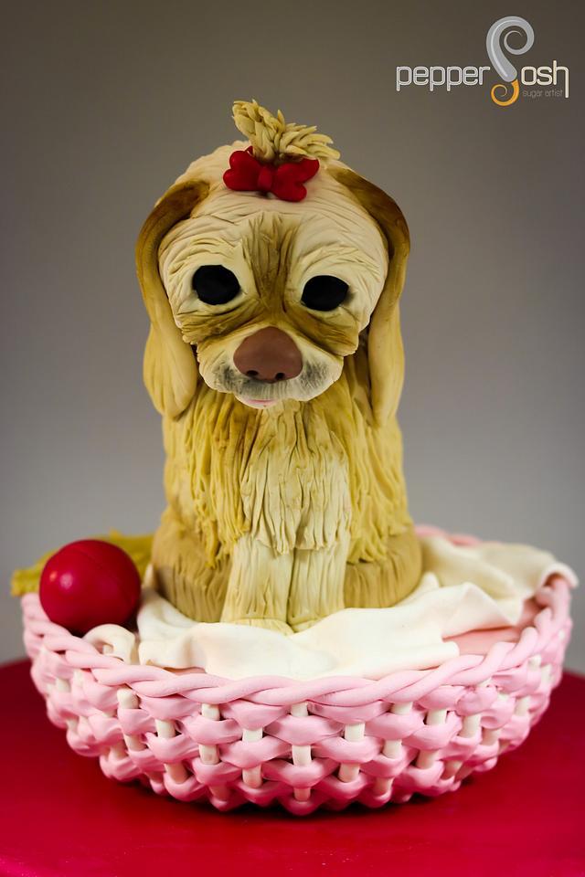 Guitinha - The Dog!