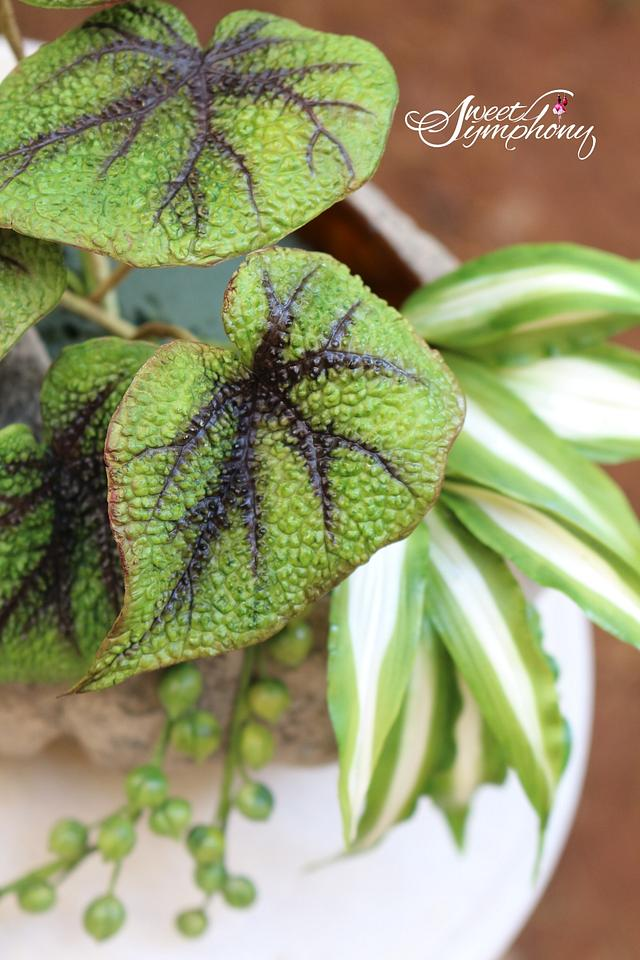 Iron cross Begonias,Spider plant and String of pearls succulents