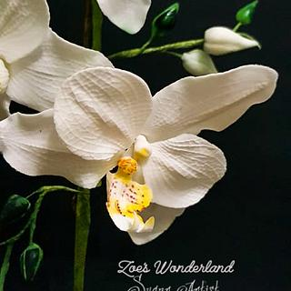 My sugar Orchids - Cake by Zoe Pappou