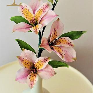 Alstromeria - Peruvian lily