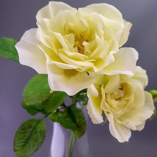 Sugar paste roses.