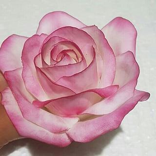 Rosa bicolor en pasta de goma