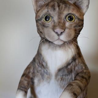 Minou the cat