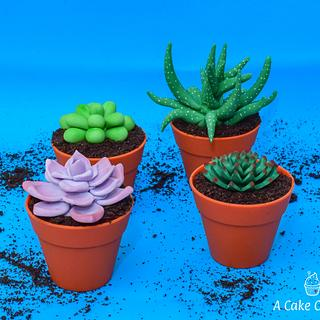 Succulent Mini Cakes - Cake by Acakeonlife