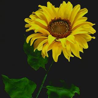 Sugar Sunflower 🌻