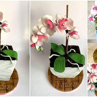 Orchid cake - Cake by MaKao
