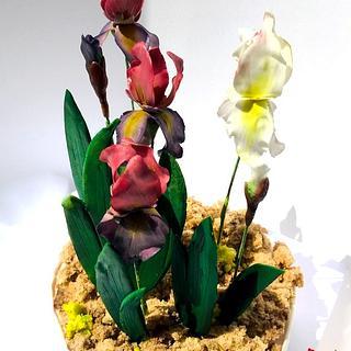 Flowerpaste Iris
