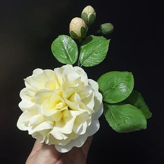 Flowers Japanese Camellias