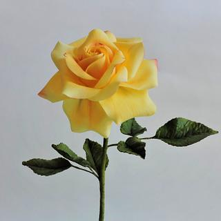 Sentimental Yellow Rose
