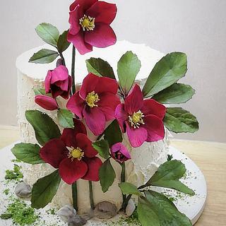 Hellebore cake
