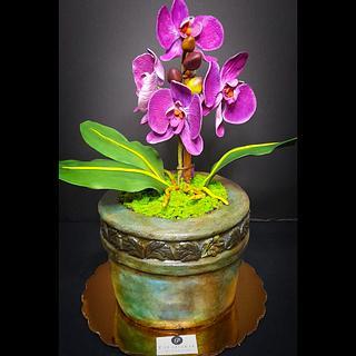 Orchids pot cake - Cake by Paladarte El Salvador