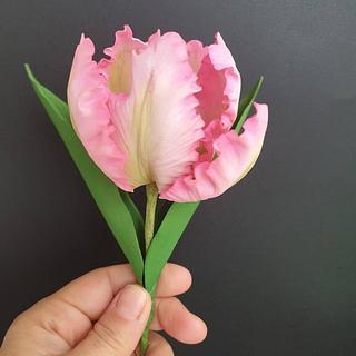 Sugarpaste parrot tulip