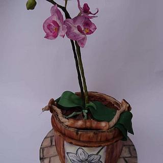 Orchid cake - Cake by Szandra