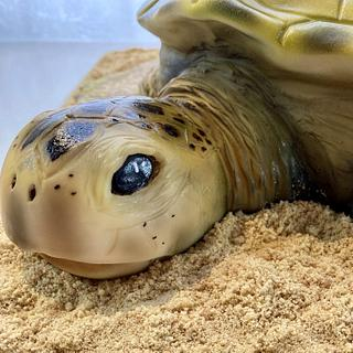 Sea Turtle cake - Cake by Fondant Fantasies of Malvern