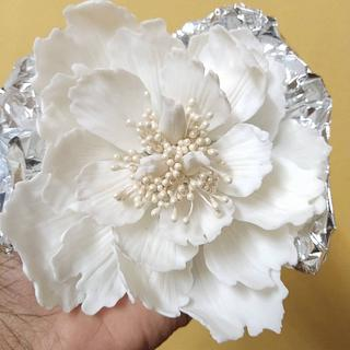 Peony  - Cake by Cups'& Cakery Design