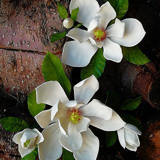 Magnolia grandiflora - Cake by babkaKatka