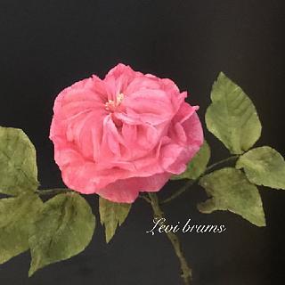 wafer paper rosa austin