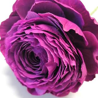 Tomer Purple Ranunculus  - Cake by Catalina Anghel azúcar'arte