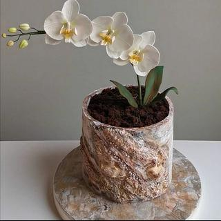 Anniversary Cake with Orchid (Sugar Flower)