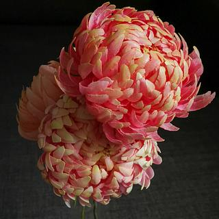 Wafer paper Chrysanthemum a