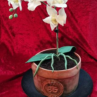 Orchid flowerpot - Cake by Topping Queen by Diana Adler