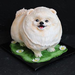 3d Cake Собака Шпиц  - Cake by Екатерина Андриянова