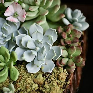 Gumpaste succulent