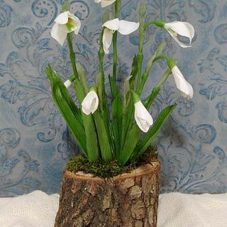 Galanthus ricepaste