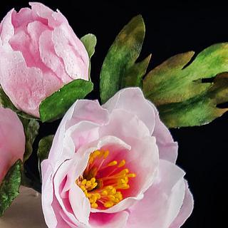Gentle Peony flower  - Cake by Sweet Steffi