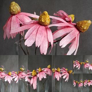 Echinacea/ Cone flower  - Cake by Tassik