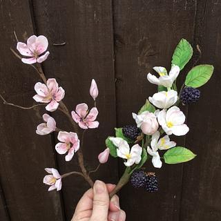 Sugar cherry and apple blossom