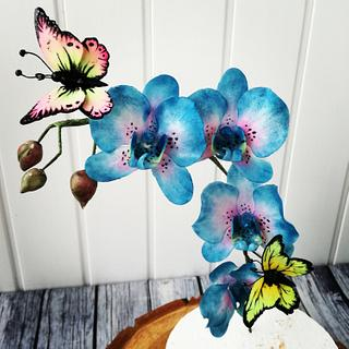Blue orchid and butterflies