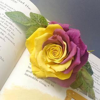 Dual tone Rose