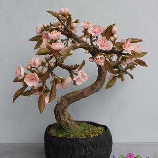 sakura bonsai  japan cake collaboration - Cake by Nesrindinc_sugarflorist