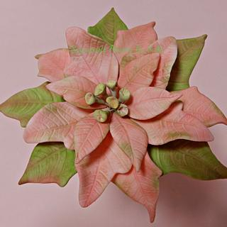 Pink Poinsettia - Cake by SallyMack