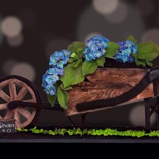 Hydrangeas in a wheelbarrow