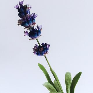 Sugar lavender.