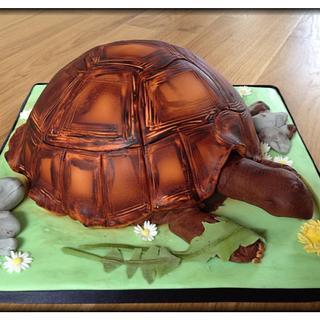 Pebbles the tortoise!