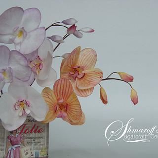 Wafer paper Moth Orchid