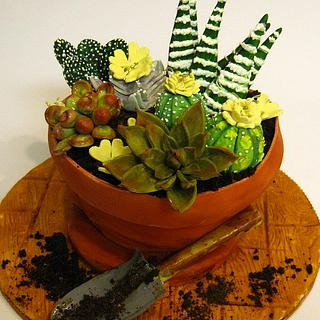 Succulent potted plant cake