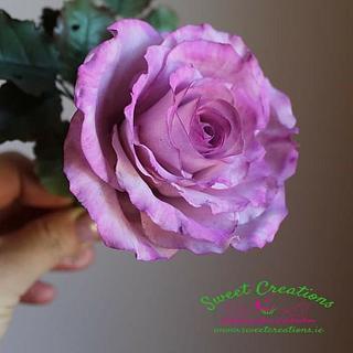 Evelyn's Rose