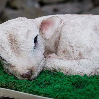 Lamb Cake - Cake by Mayummy