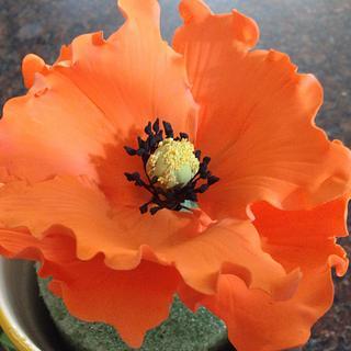 California poppy n parrot tulip!!!