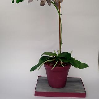 Orchid cake pot