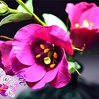 Lishianthus