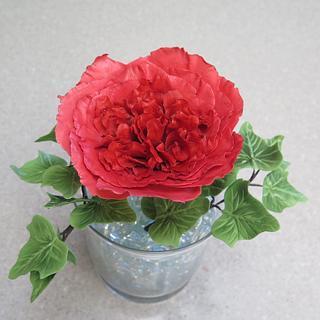 David Austin rose, sugar flower MBalaska