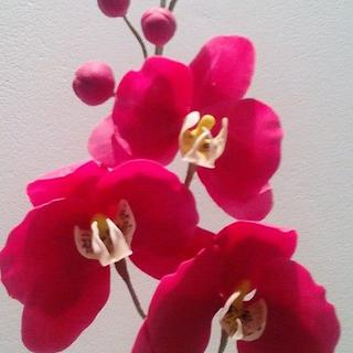 Moth Orchid- free form