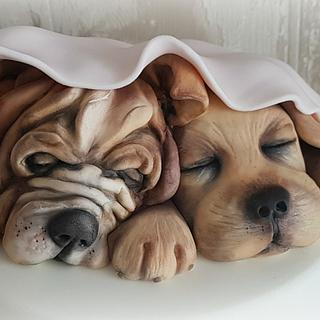 Little dogs...
