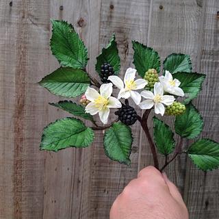 AaronSugarflowers - balckberry