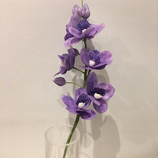 Sugar Vanda orchid